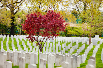 Fototapete - Rows of tombs and graves on military cemetery at spring in Arlington