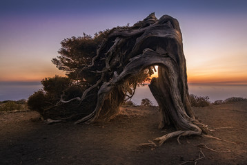 "An old Juniper tree twisted by the constant winds presents in the top of this mountain in a place called ""El Sabinar"". This place is in the canary island of El Hierro."