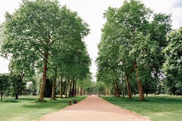 Foto auf Gartenposter Olivgrun Trees On Landscape Against Clear Sky