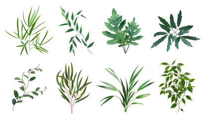 Green realistic herbs. Eucalyptus, fern plant, greenery foliage plants, botanical natural leaves herbs isolated vector illustration set. Plant tropical, botanical and natural fern