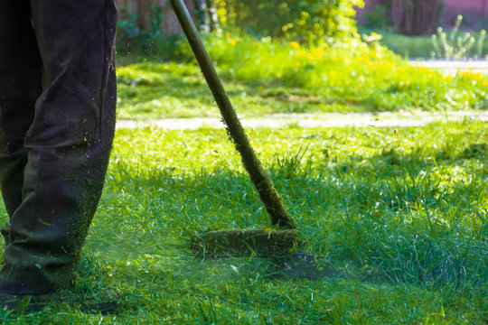 lawn care maintenance. professional grass cutting in the yard