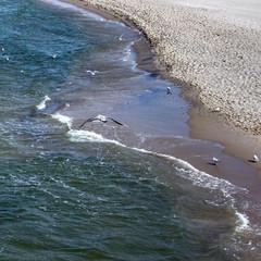 Mewy latające nad Morzem Bałtyckim w Międzyzdrojach
