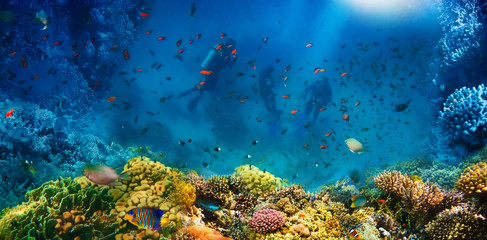 Garden Poster Coral reefs Group of scuba divers exploring coral reef. Underwater sports and tropical vacation concept