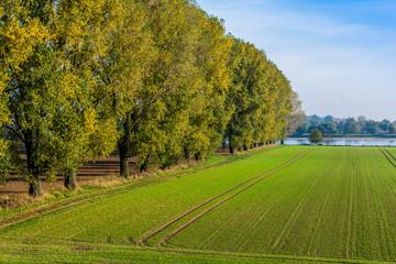 2502 Rheinfeld