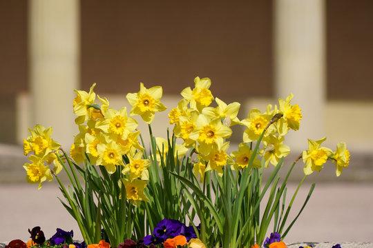 Gelbe Blumen vor Trauerhalle