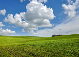 Wall Mural - cloudy sky, green fields of winter wheat in hilly terrain in spring