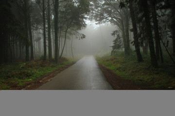 Road Path in a forest covered with mist.
