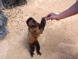 Cropped Image Of Hand Feeding Monkey