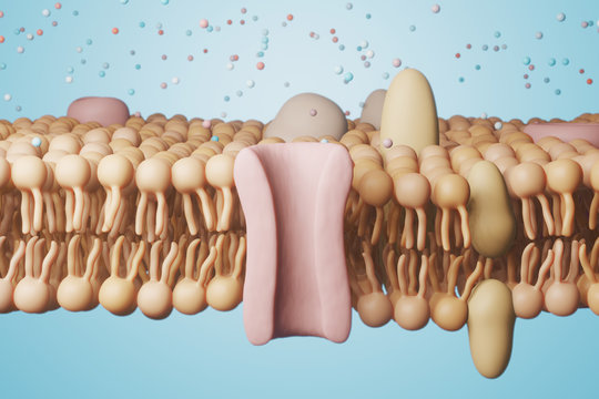 Cell Membrane structure. 3d rendering - illustration.