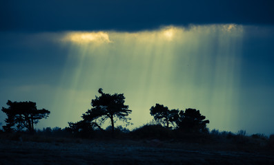 Foto auf Gartenposter Olivgrun Silhouette Trees On Landscape Against Blue Sky