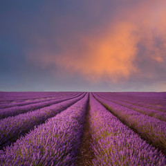 Epic vibrant warm Summer sunset over epic lavender field landscape