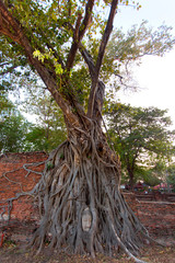 Buddha head surrounded by tree roots Thailand