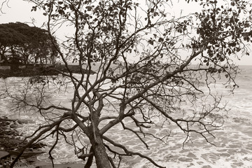 Tree next to sea in black and white in fort kochi, kerala india