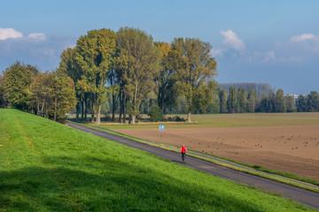 2494 Rheinfeld