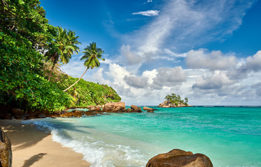 Fototapete - Beach with palm tree and rocks landscape