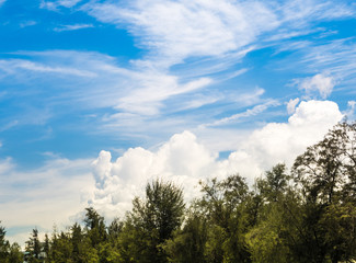 Wall Mural - White fluffy clouds in the bright blue sky with glare and bright light of Sun over the pine trees