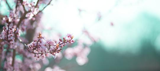 Fototapeta wiosenne kwiaty obraz