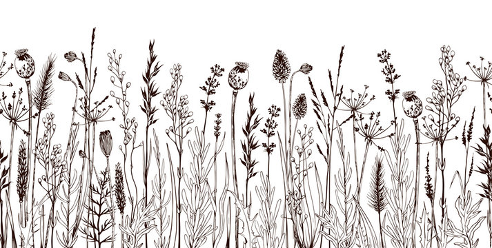 Seamless horizontally border with meadow wild flowers and herbs.