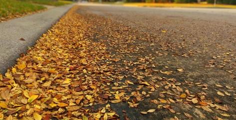 Fotomurales - Autumn Leaves Fallen On Road