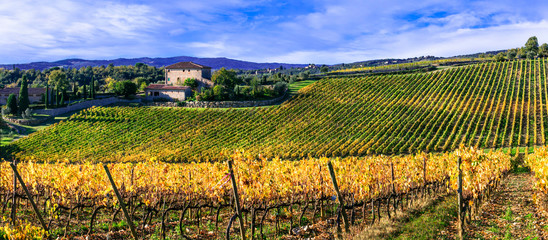 Golden vineyards. Beautiful fields of grape in autumn colors. Tuscany scenery. Italy