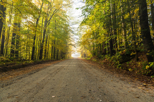 Deserted unpaved road through a beautiful deciduous forest shrouded in morning fog in autumn. Waterbury, VT, USA.