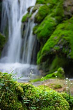 Moss and flowers next to Toberia Falls at Entzia mountain range, Alava, Spain