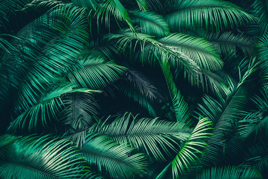 nature background of green forest, tropical forest in green filter