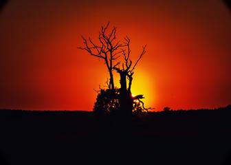 Sylwetki drzew podczas zachodu słońca