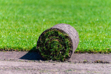 Field with high-quality, multi-purpose ryegrass or fescue turf for healthy, green and hard wearing lawn, turf grass rolls ready for use