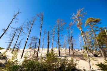 Wydmy słowiński park narodowy łeba piasek lato morze bałtyckie