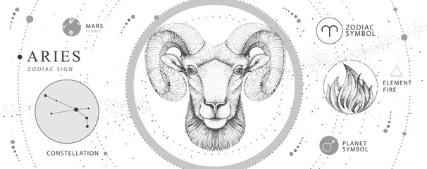 Modern magic witchcraft card with astrology Aries zodiac sign. Realistic hand drawing ram or mouflon head. Zodiac characteristic Fotomurales