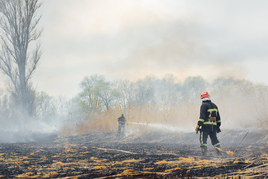 Firefighter battle with the wildfire. Firefighters are training. Firemen are using foam or water in fire fighting operation.