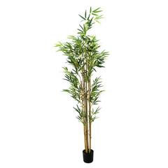 bamboo plant isolated on white background