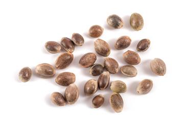 Fototapeta Hemp  seeds