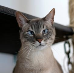 close up of cross eyed cat
