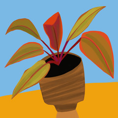 Sunset Philodendron