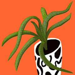 Succulent on Orange