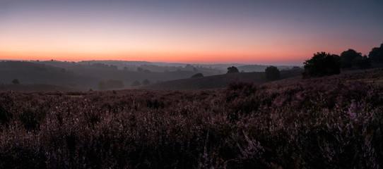 Foto auf AluDibond Lavendel Scenic View Of Landscape Against Clear Sky