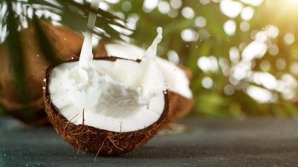 Wall Mural - Super Slow Motion Shot of Milk Splashing on Coconut at 4K.