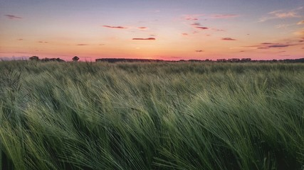 Foto auf Gartenposter Khaki Scenic View Of Landscape At Sunset