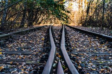 Spoed Fotobehang Spoorlijn Railroad Tracks Amidst Trees