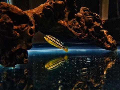 Close-up Of Yellow Fish Swimming In Aquarium