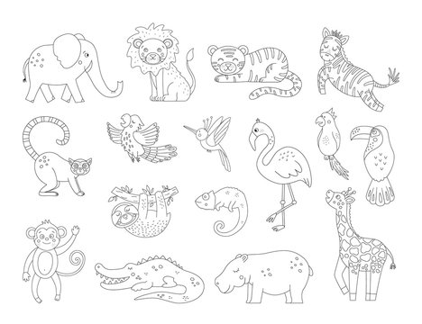 Vector cute exotic animals and birds outlines. Funny tropical black and white illustration. Jungle summer sketch.