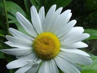 Obraz bialy kwiat - fototapety do salonu
