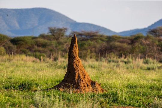 Termitière géante dans savane africaine