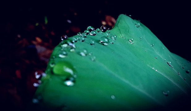 Close-up Of Water Drops On Leaf Against Black Background