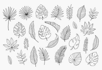 Tropical Leaves in doodle style. Vector hand drawn black line design elements. Exotic summer botanical illustrations. Monstera leaves, palm, banana leaf.