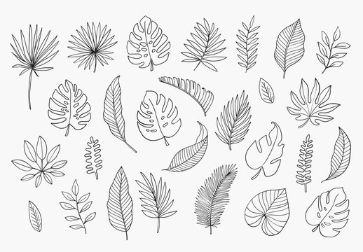 Tropical Leaves in doodle style. Vector hand drawn black line design elements. Exotic summer botanical illustrations. Monstera leaves, palm, banana leaf.