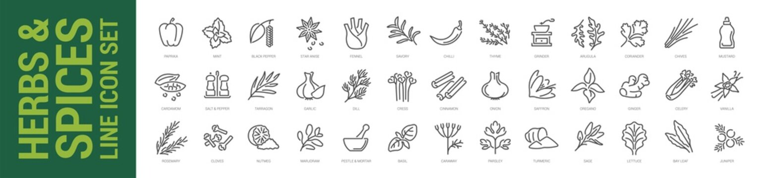 Herbs & spices line icon set. Vector isolated outline illustration