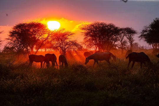 Troupeau de chevaux en liberté dans une prairie au coucher du soleil